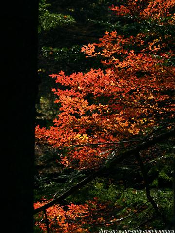 karuizawa16