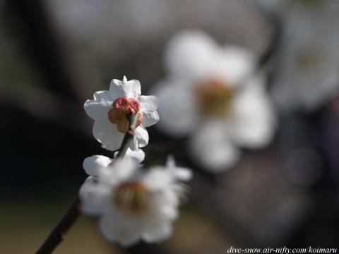 todoroki_haru09